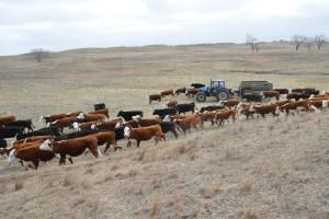Fütterung auf der Morgan Ranch