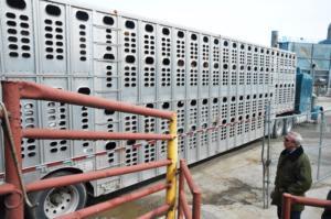 Ankunft eines Viehtransports